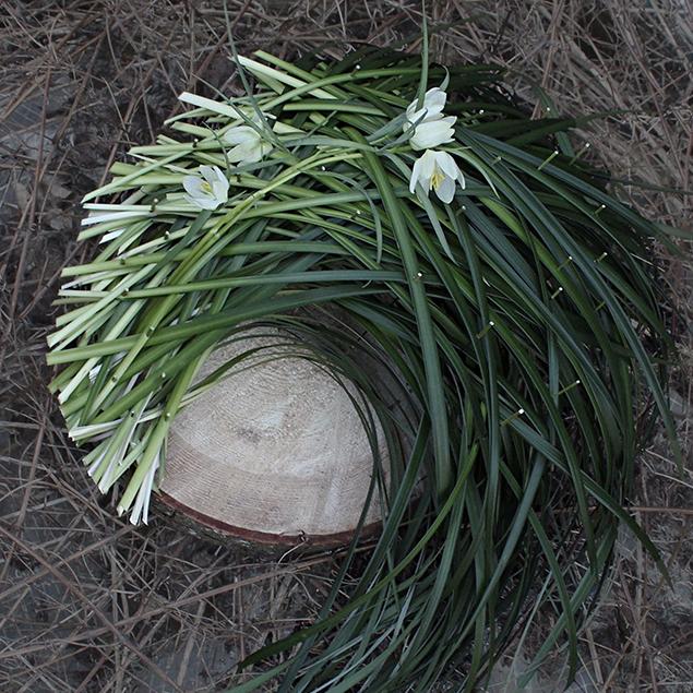 Blomster - Skråsnit